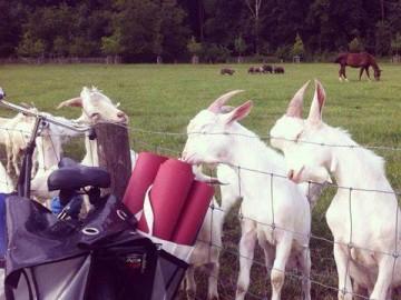 Op de boerderie :)